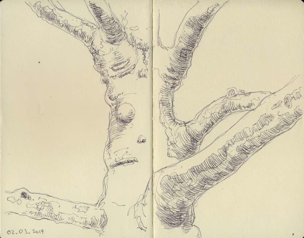 Maple trunk, ball point