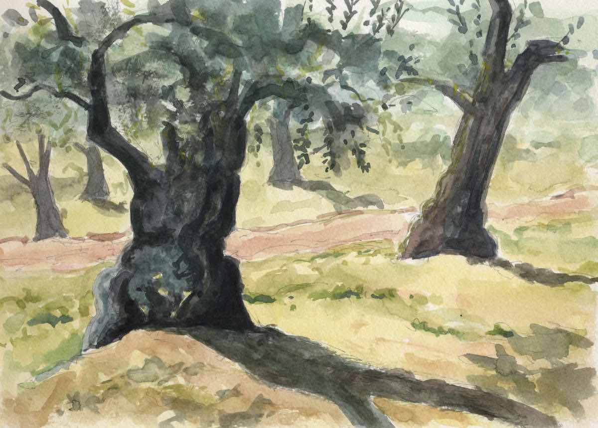 Olive grove, watercolor